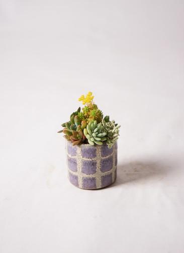 多肉植物 寄せ植え Favor Pot Gray #001