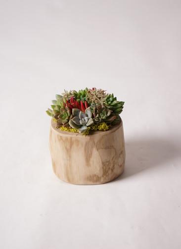 多肉植物 寄せ植え Teak Wood Round Large #002