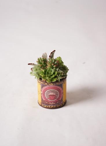 多肉植物 寄せ植え キャニングシリンダー S #004