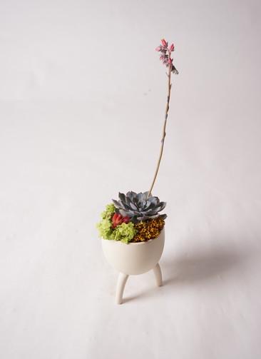 多肉植物 寄せ植え Four Foot Cup #003