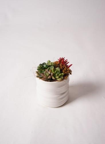 多肉植物 寄せ植え Ceramic Mat White #002