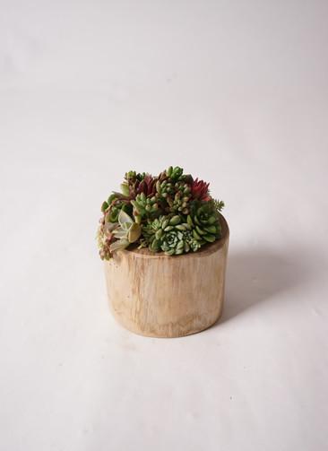 多肉植物 寄せ植え Teak Wood Round #002