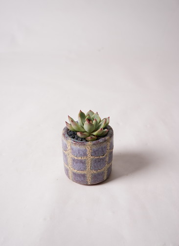多肉植物 寄せ植え Favor Pot Gray #004