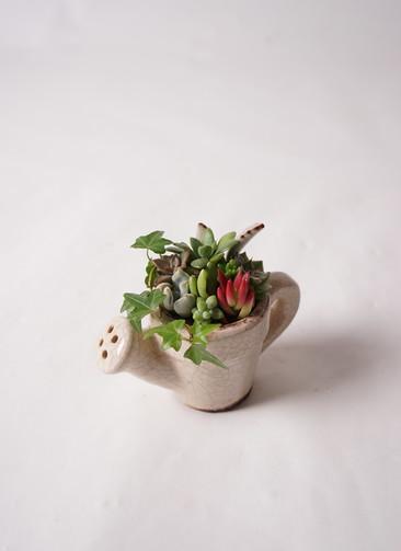 多肉植物 寄せ植え セボージョーロ S #001