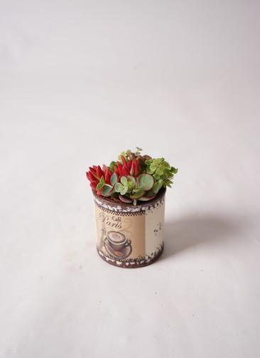 多肉植物 寄せ植え キャニングシリンダー S #001