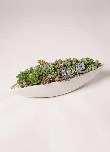 多肉植物 寄せ植え ポリストーンリーフ(ホワイト)