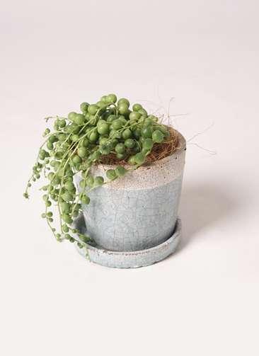 多肉植物 寄せ植え クレーパー 4号 受け皿付き 緑