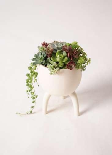 多肉植物 寄せ植え Four Foot Cup
