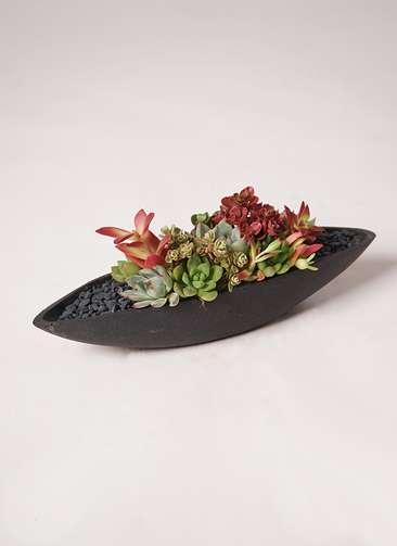 多肉植物 寄せ植え ポリストーンリーフ(ブラック)