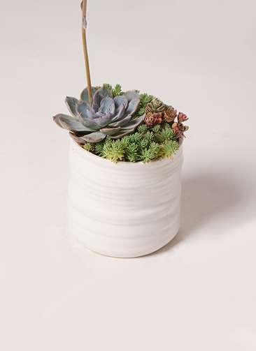多肉植物 寄せ植え Ceramic Mat White
