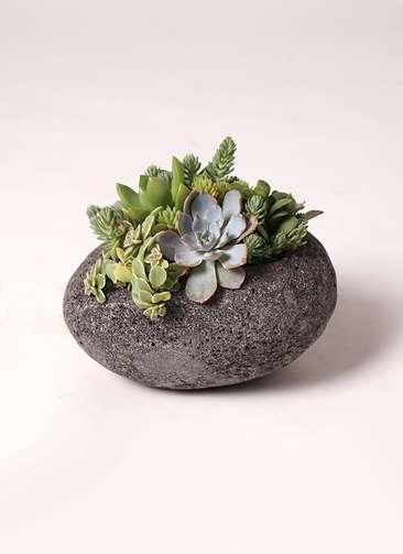 多肉植物 寄せ植え 黒石