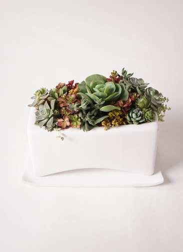 多肉植物 寄せ植え アーチワイド ホワイト