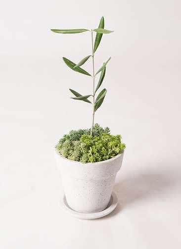 多肉植物 寄せ植え パウダーストーン12 ホワイト