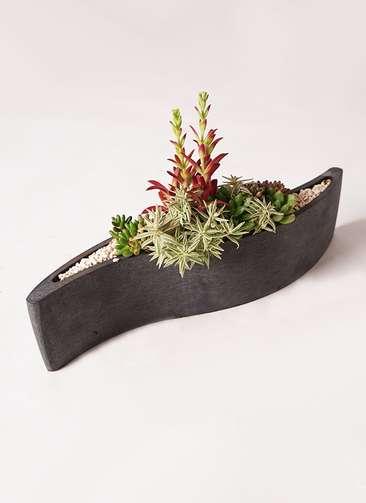 多肉植物 寄せ植え ポリストーン wave S ブラック