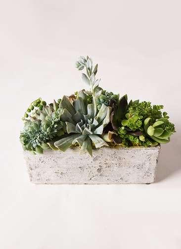 多肉植物 寄せ植え プラスチックブリック15