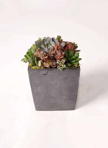 多肉植物 寄せ植え ポリストーン キューブ S ブラック