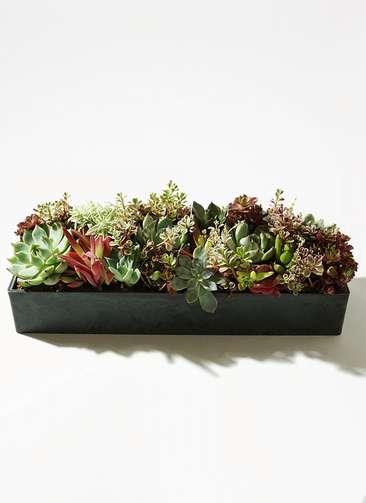多肉植物 寄せ植え プラスチックオブロング32  #001