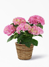【母の日ギフト】鉢花 あじさい 5号 ピンクセット バナナリーフバスケット【送料無料】