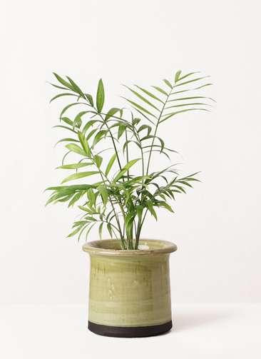 観葉植物 テーブルヤシ 4号 アンティークテラコッタ グリーン 付き