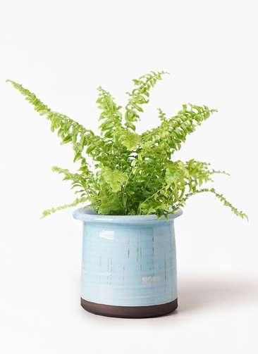 観葉植物 ネフロピレス 3.5号 アンティークテラコッタ ブルー 付き
