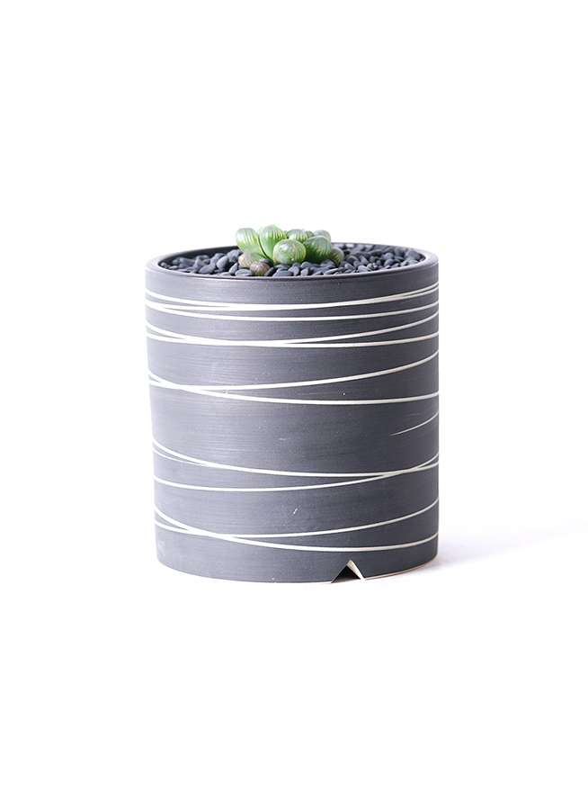 多肉植物 ハオルチア オブツーサ ピリフェラ トルンカータ S 3号 Kross 【L size】