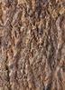 鉢カバー Mango Wood(マンゴーウッド) 2号鉢用 #stem W9710 3枚目
