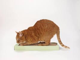 猫のストレス発散にオススメなグッズ8選