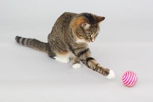 猫が喜ぶおもちゃ12選。猫がじゃれるおもちゃで遊ぼう