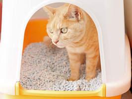 猫のトイレ時に便利なグッズ9選