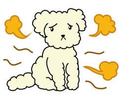 犬の臭いを解消!犬用消臭グッズ9選