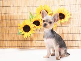 犬の夏バテ防止!夏に使いたい犬グッズ11選