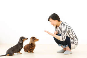犬のしつけに役立つグッズ9選。しつけを楽にしっかりしよう