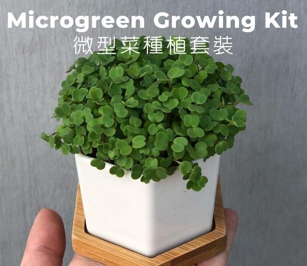 微型菜種植套裝 給客戶送上一份綠色祝福