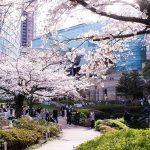 春爛漫!ゆるやかに桜を愛でるお勧めレストラン3店