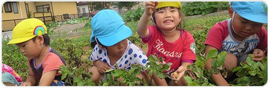 ★2017年&2016年度同時募集中!!★【賞与最大4.4ヶ月!!】茶栽培の盛んな地域です♪自然豊かな環境でのびのびと保育を行なっています!!