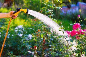 将来は庭でガーデニングをしてみたいという洲崎さん