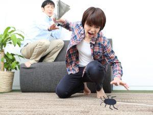 ゴキブリを見つけたら即座に駆除・対策を