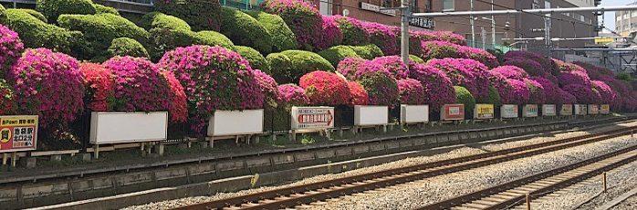 【山手線29駅の魅力を探る・駒込駅2】歴史と伝統が町の様々な表情を生む