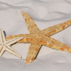 Starfish 343791 640