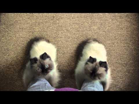 Temptation貓小食搞笑廣告