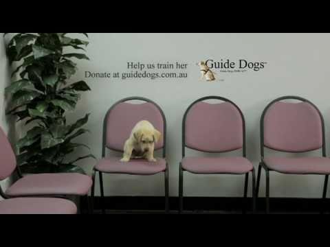 電視廣告六十秒:導盲犬面試