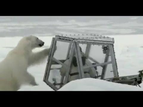 野生動物攝影師的北極熊歷險記