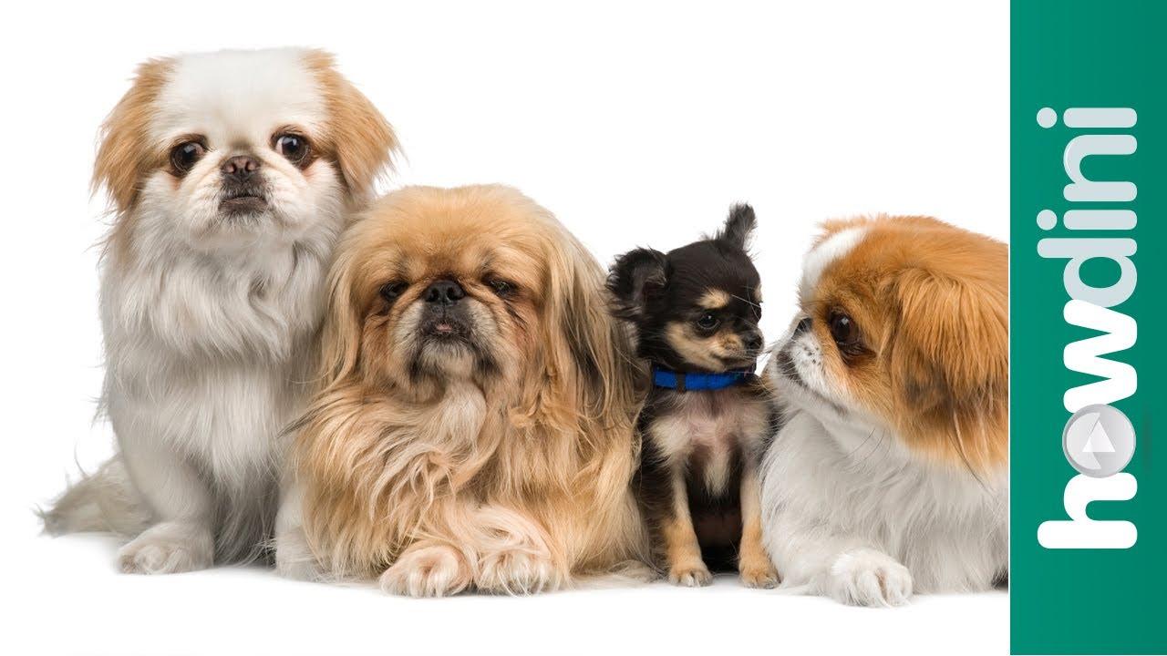 想養狗兒,該注意些什麼呢?