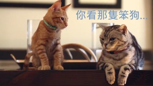貓狗 英文