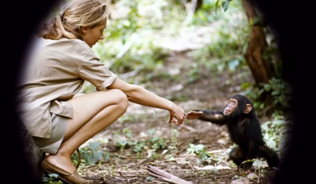 with chimp