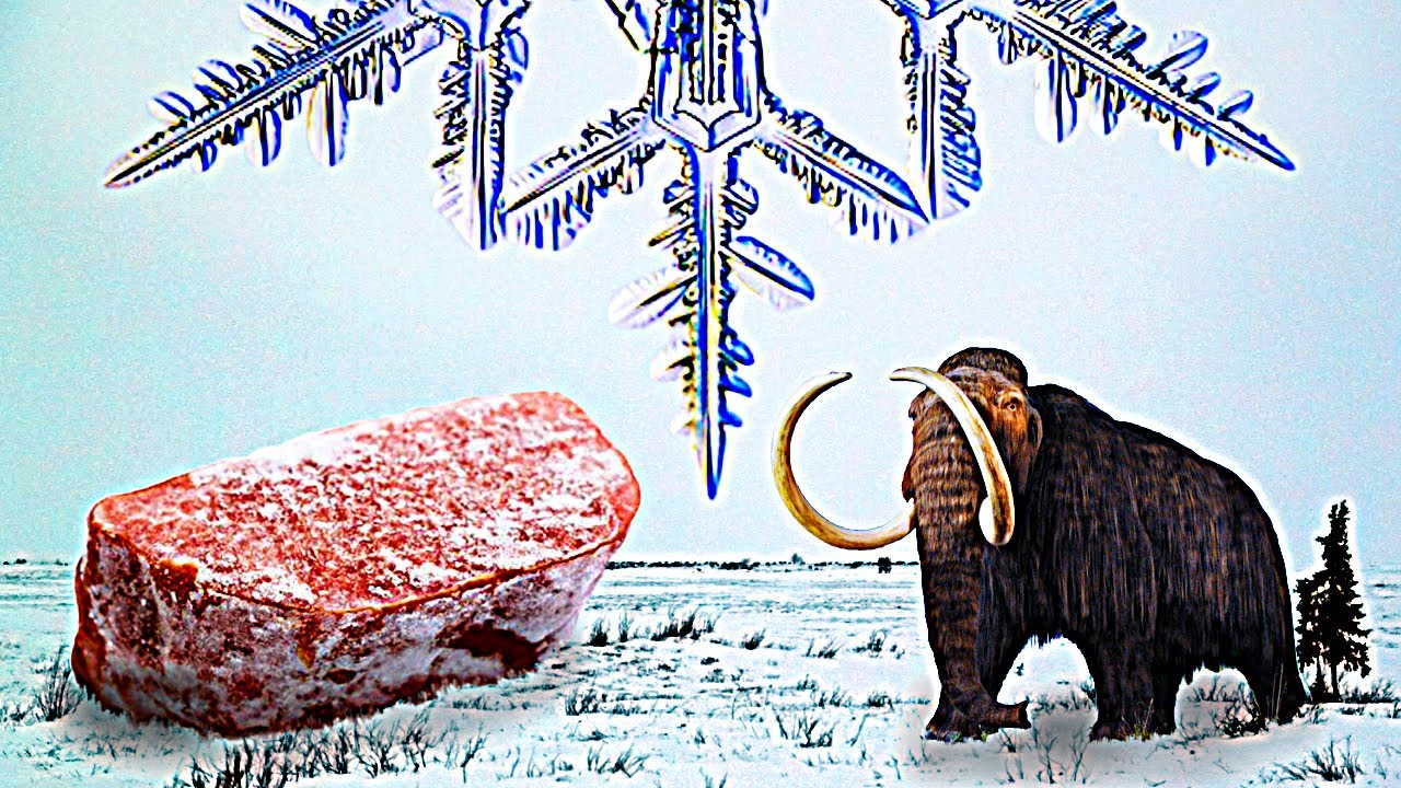 冷凍食物二三事