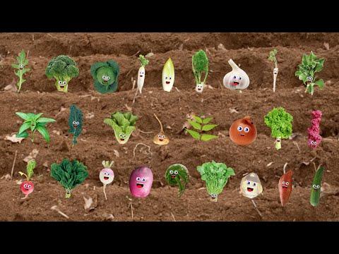 「一起來唱 ABC 蔬菜歌!」- Vegetable Song