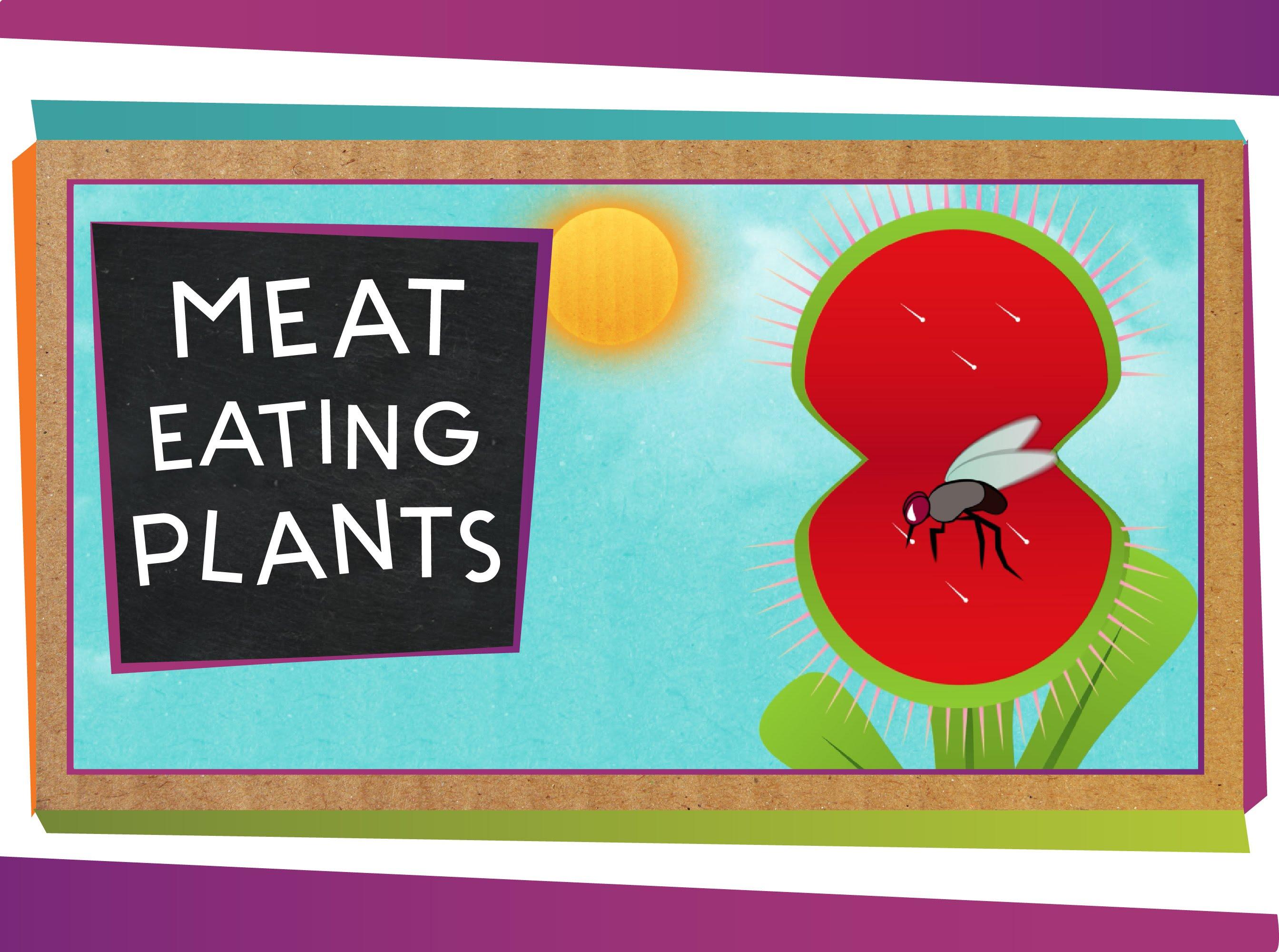 常被小看的昆蟲殺手:食肉植物