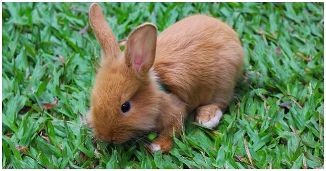 小兔子 英文