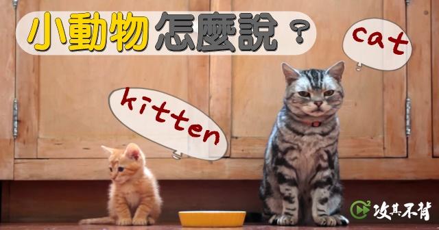 小貓 英文